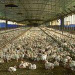 Eladó állattartótelep 1 db fotó