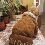 Új vastag téli kutyaruha féláron fotó