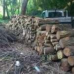 Méteres tűzifa eladó Zala megyében fotó